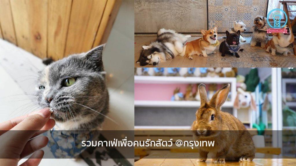 รวมคาเฟ่เพื่อคนรักสัตว์ @กรุงเทพ nungchillchill บาร์ลับ ร้านนั่งชิล แฮงเอาท์ ร้านดาดฟ้า
