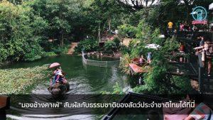 """""""มองช้างคาเฟ่"""" สัมผัสกับธรรมชาติของสัตว์ประจำชาติไทยได้ที่นี่ nungchillchill บาร์ลับ ร้านนั่งชิล แฮงเอาท์ ร้านดาดฟ้า"""