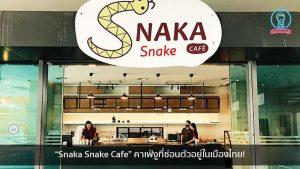 """""""Snaka Snake Cafe"""" คาเฟ่งูที่ซ่อนตัวอยู่ในเมืองไทย! nungchillchill บาร์ลับ ร้านนั่งชิล แฮงเอาท์ ร้านดาดฟ้า"""