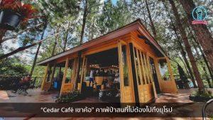 """""""Cedar Café เขาค้อ"""" คาเฟ่ป่าสนที่ไม่ต้องไปถึงยุโรป nungchillchill บาร์ลับ ร้านนั่งชิล แฮงเอาท์ ร้านดาดฟ้า"""